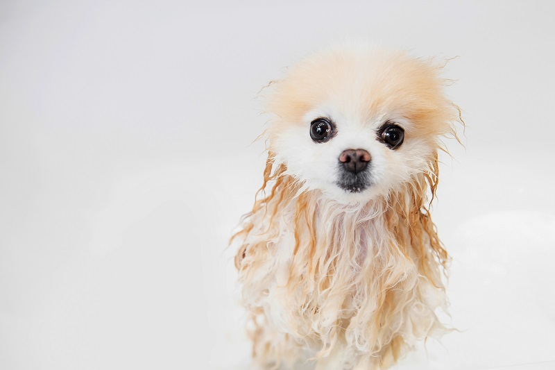 Cute wet dog taking a bath
