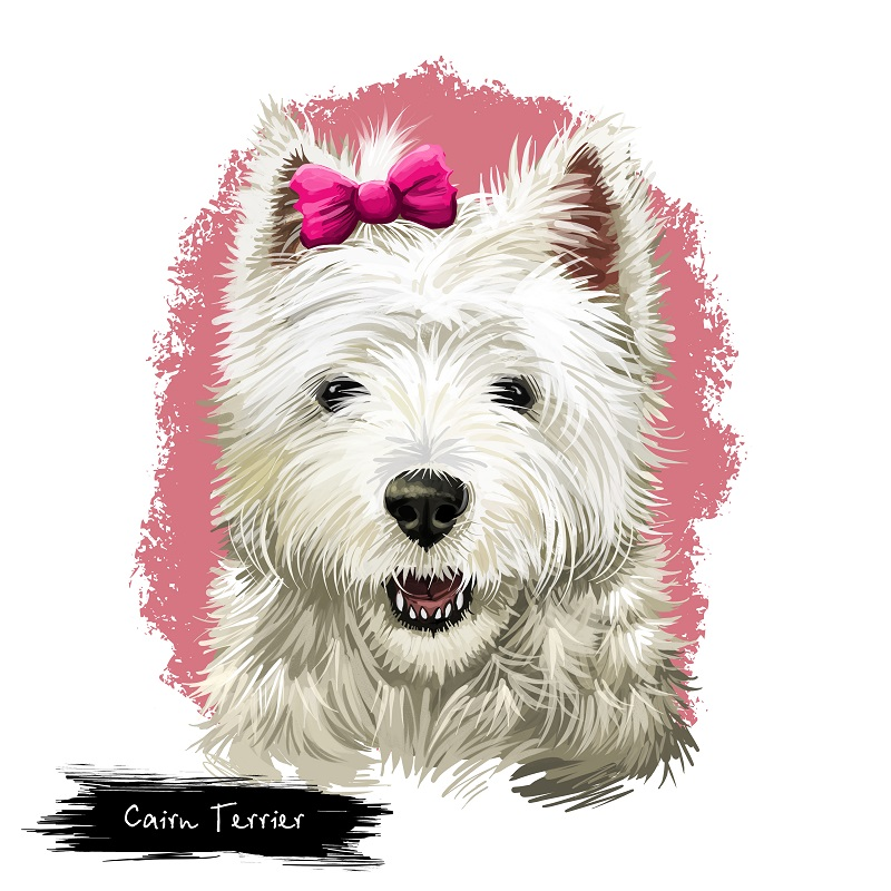 Graphic art of Cairn Terrier isolated on white background