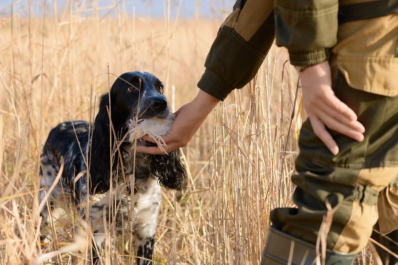 Female hunting dog with wounded bird in mouth and hunter