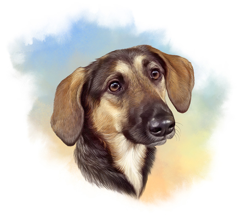 Illustration of Beagle and Labrador Retriever mixed breed