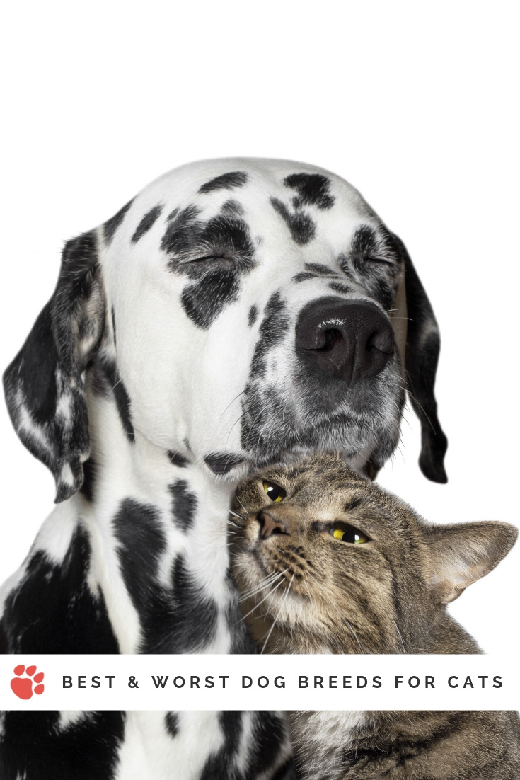 Best and worst dog breeds for cats