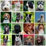 Dog Breed List - The Ultimate List of Dog Breeds