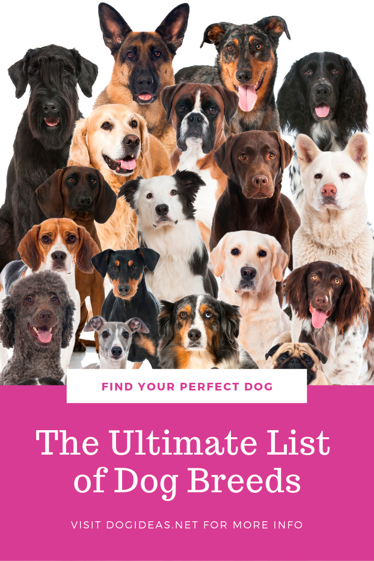The ultimate list of dog breeds
