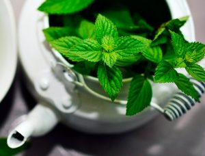 Is Peppermint Oil Safe For Dogs? Learn How To Use This Flea Repellent