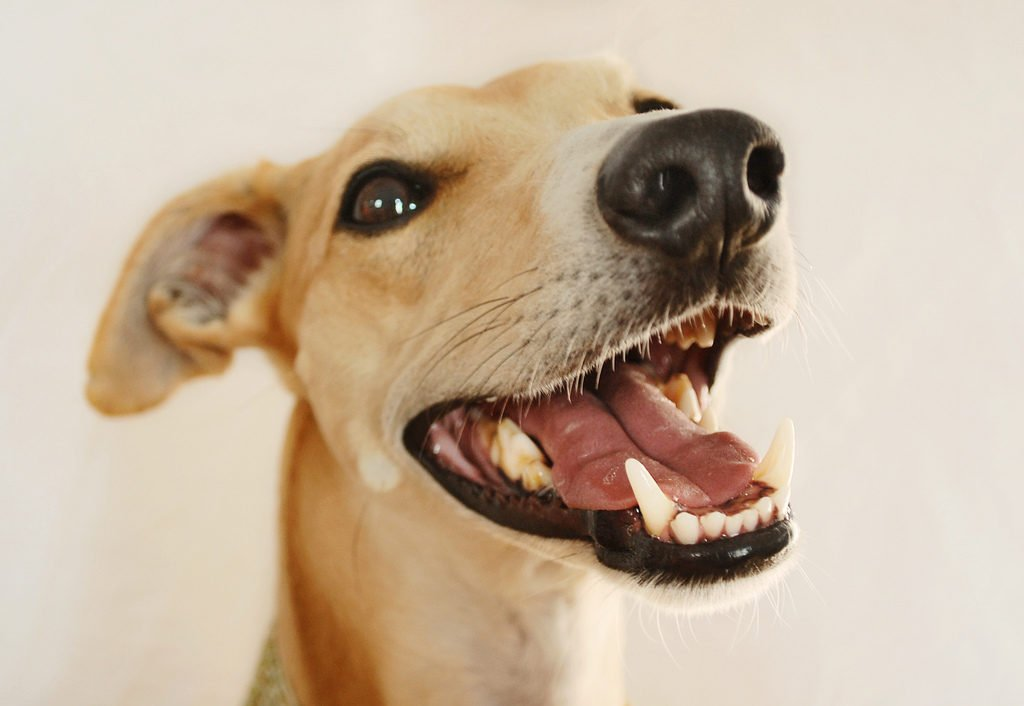 How to Keep Your Dog's Teeth Healthy and Avoid Tooth Problems