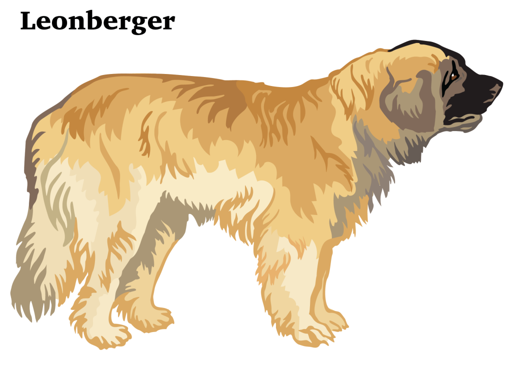Illustration of Leonberger
