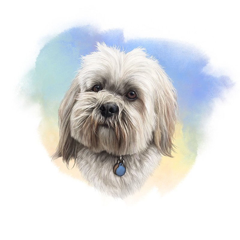 Lhasa Apso watercolor illustration