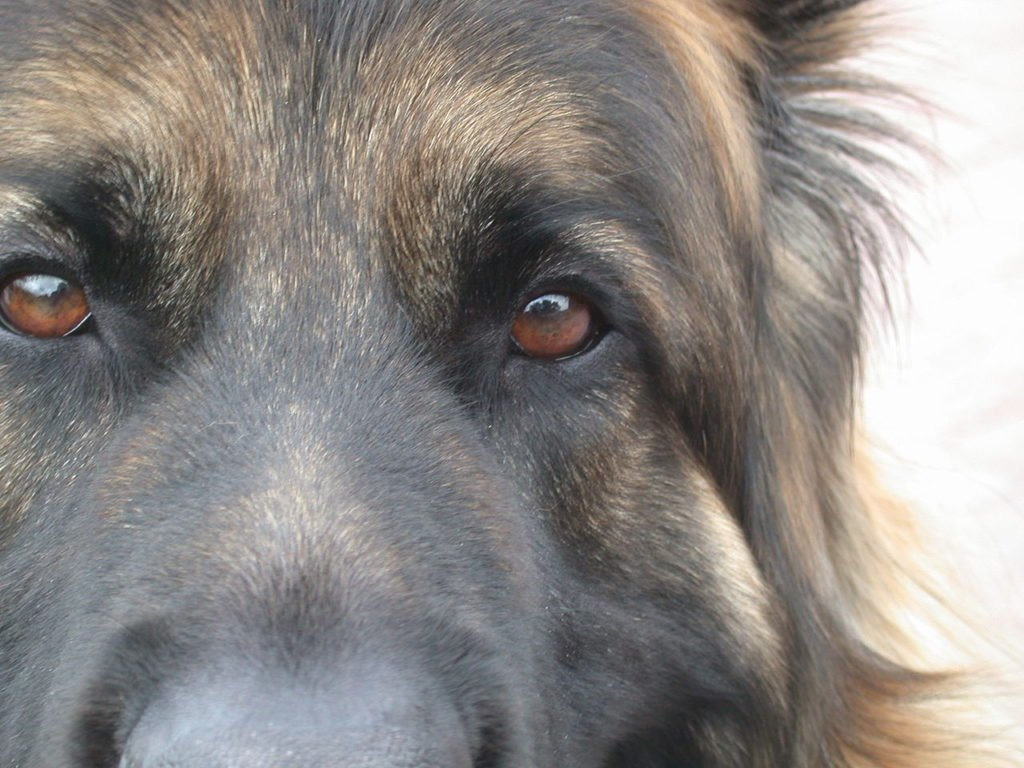 Dog looking straight into the camera