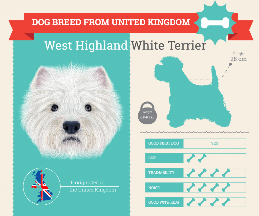 West Highland White Terrier infographic