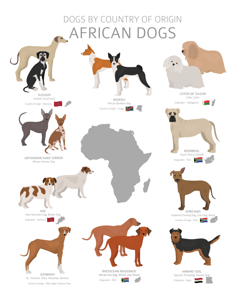 Overview of African dog breeds