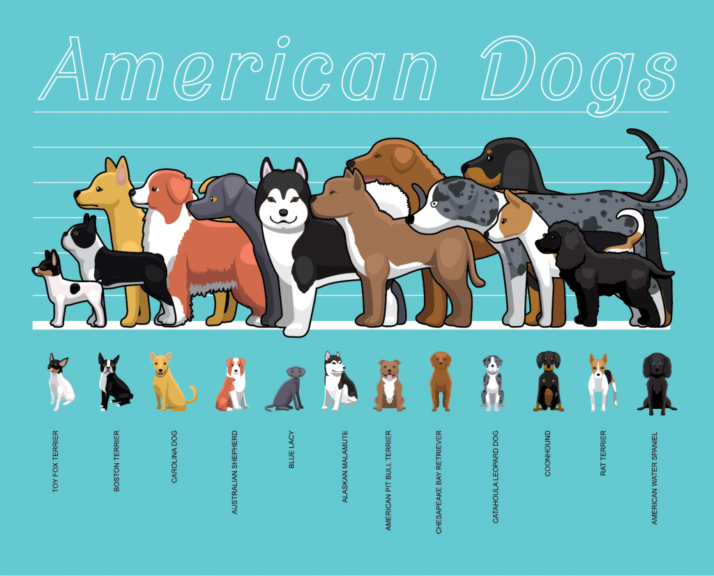 American dogs size chart