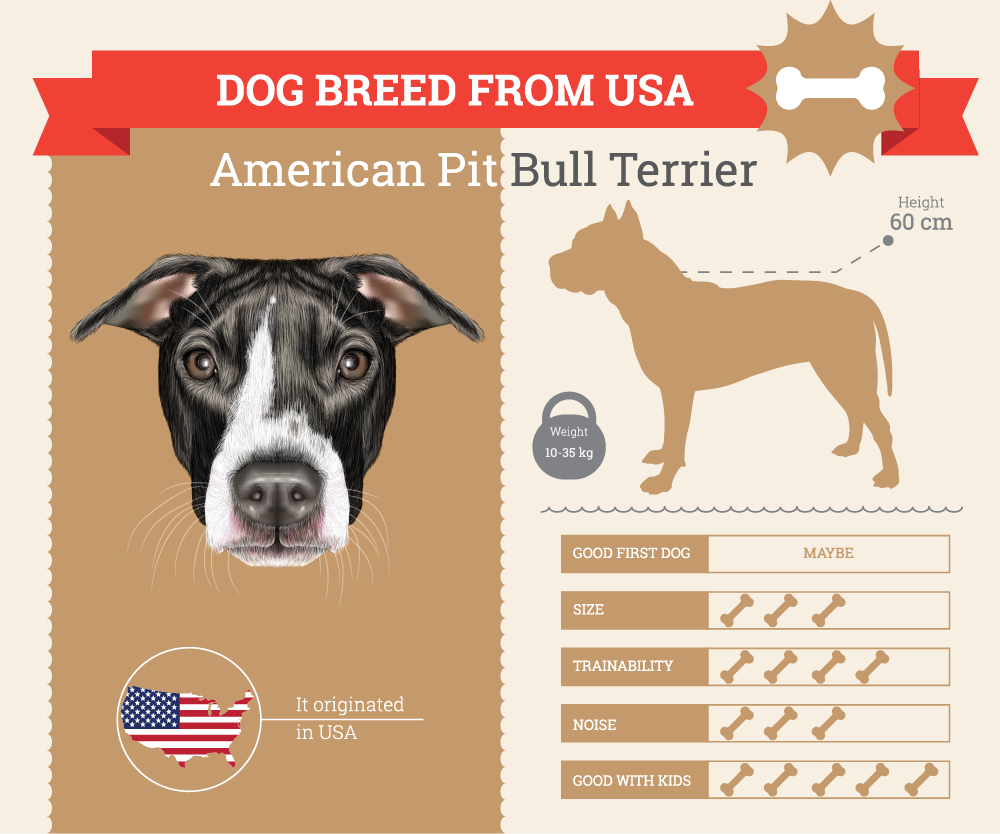 American Pit Bull Terrier Infographic