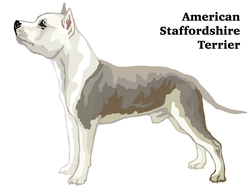 American Staffordshire Terrier graphic