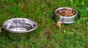 dog food in metal bowl in grass, outdoors