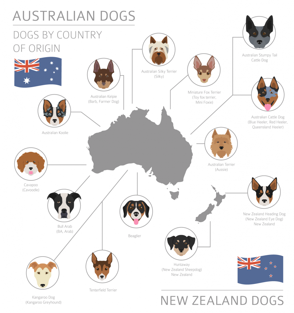 Overview of Australian dog breeds