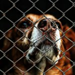 best animal charities to support