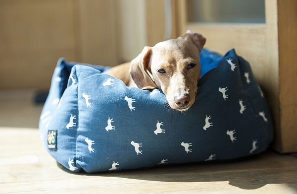 best dog beds for medium dogs