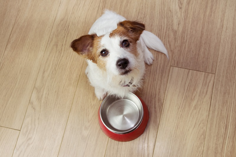 Cute dog next to an empty food bowl