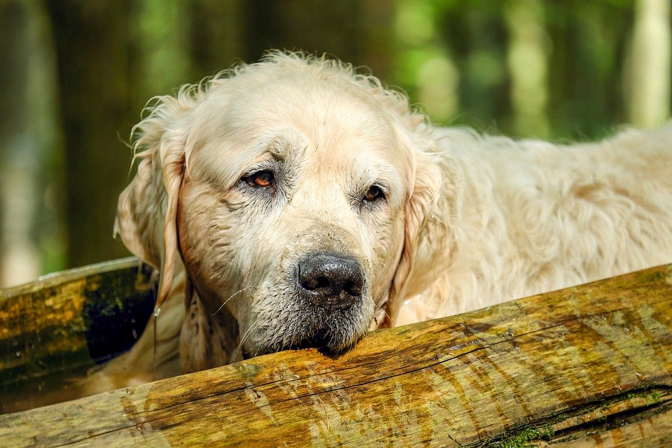 best dog food for senior dogs small and large breeds