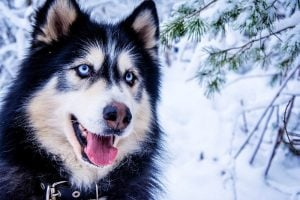 best dog names for blue eyes