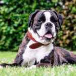 best names for boxer dogs