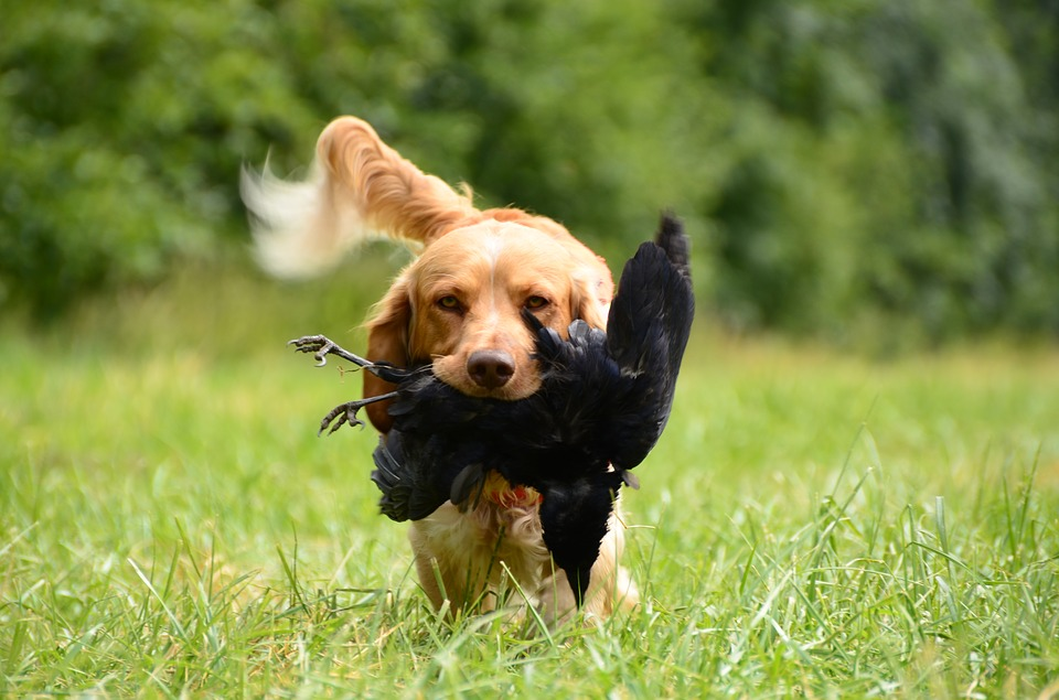 best names for hunting dog breeds