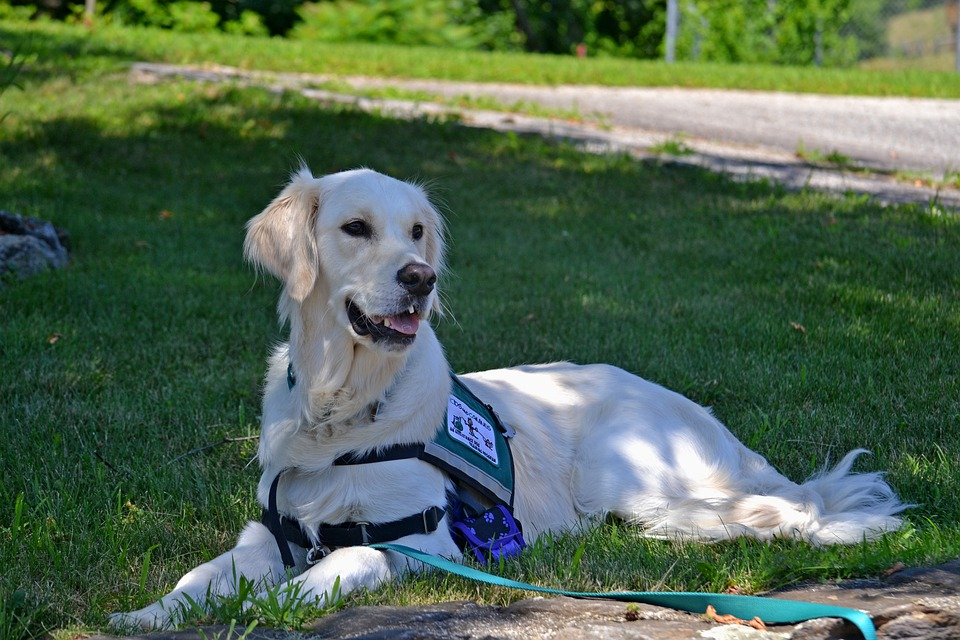10 Best Service Dogs For Ptsd Autism And Depression