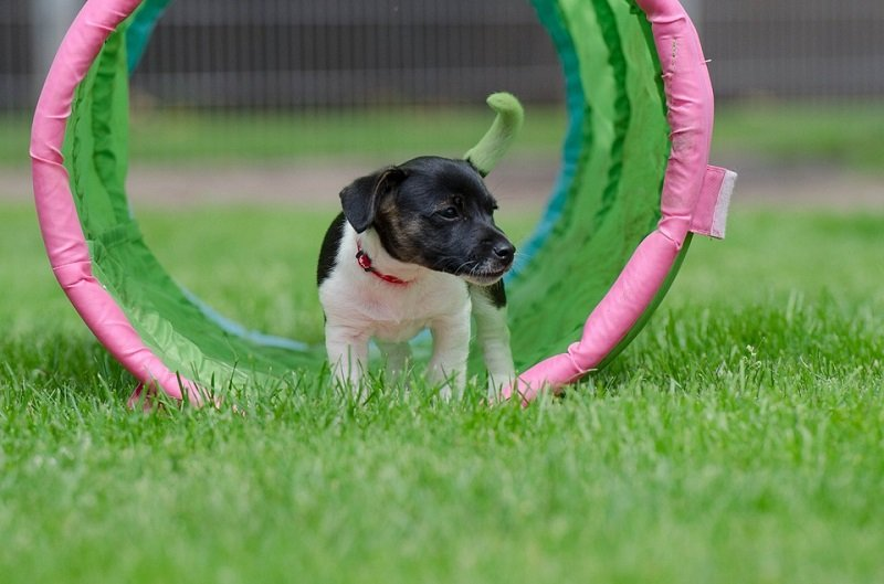 best small dog breeds easy to train