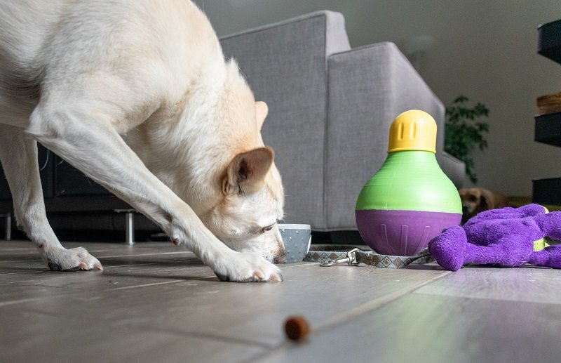 dog eating treats surrounded by toys