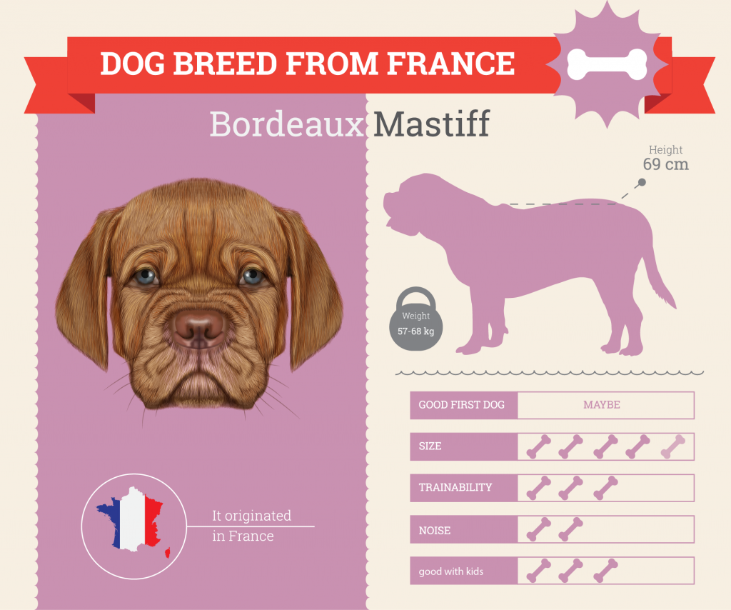 French Mastiff infographic