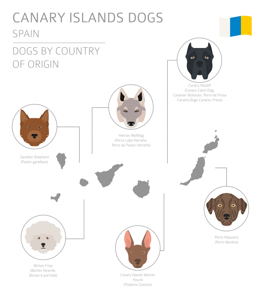 Illustration of Canary Islands dog breeds