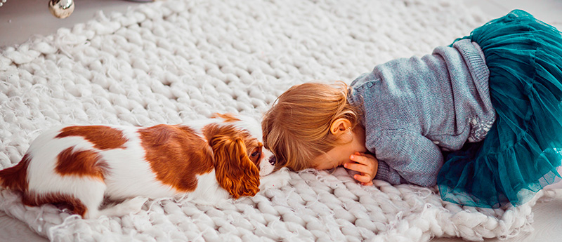 Child plays with Cavalier King Charles Spaniel on a blanket