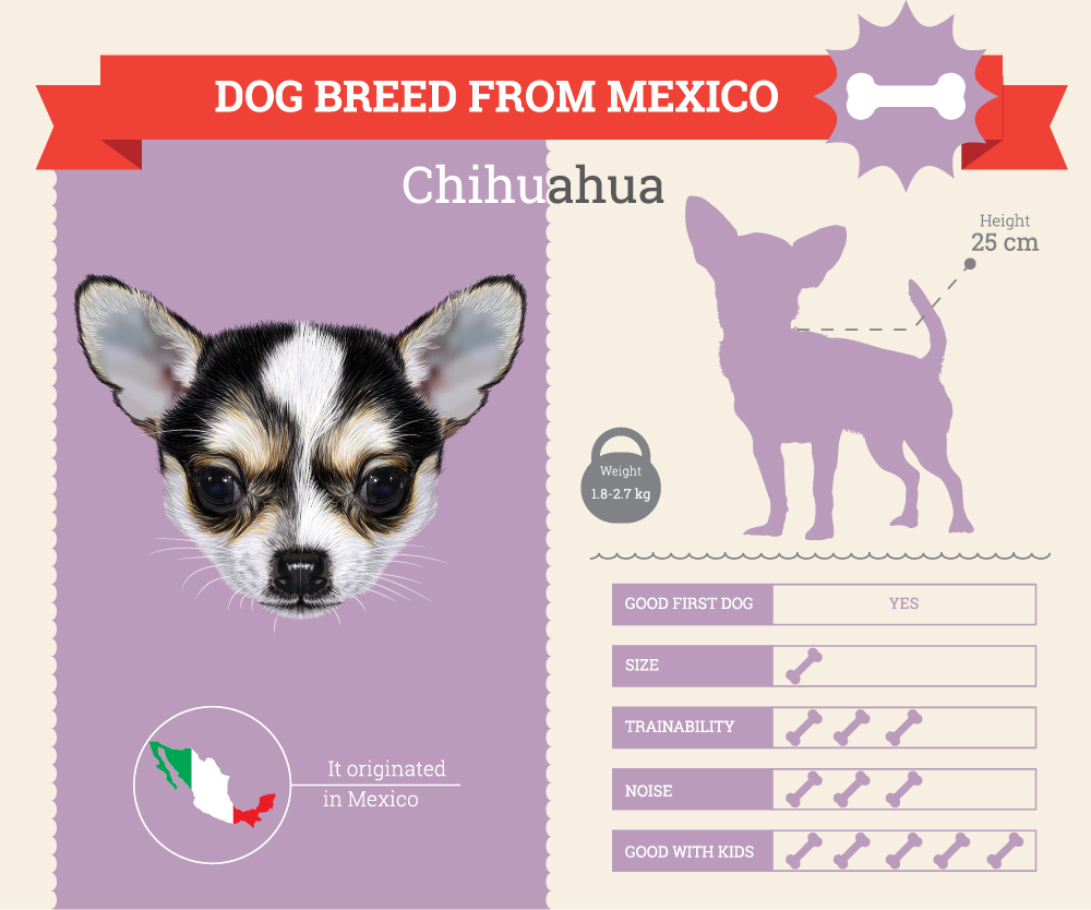 Chihuahua infographic