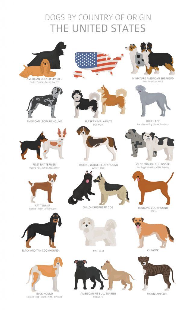 Illustration of dog breeds in USA