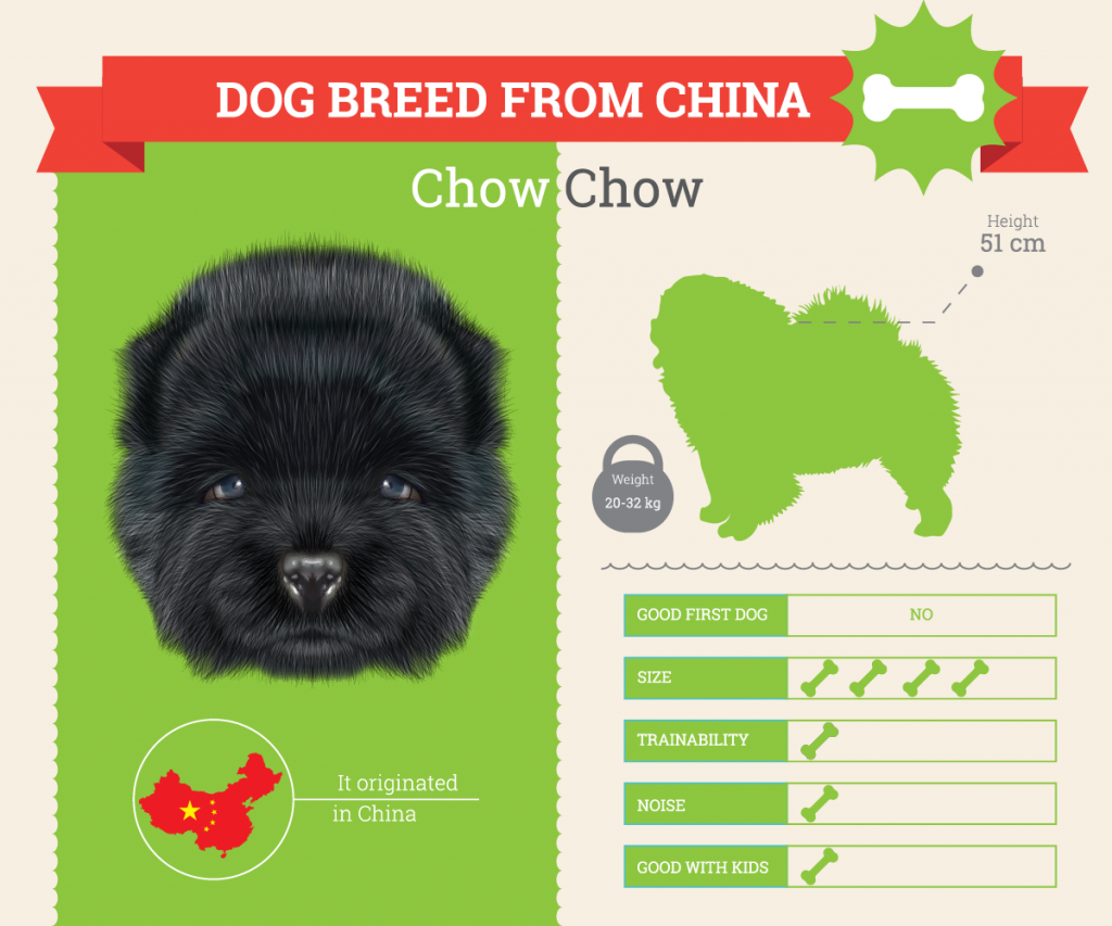 Chow Chow infographic