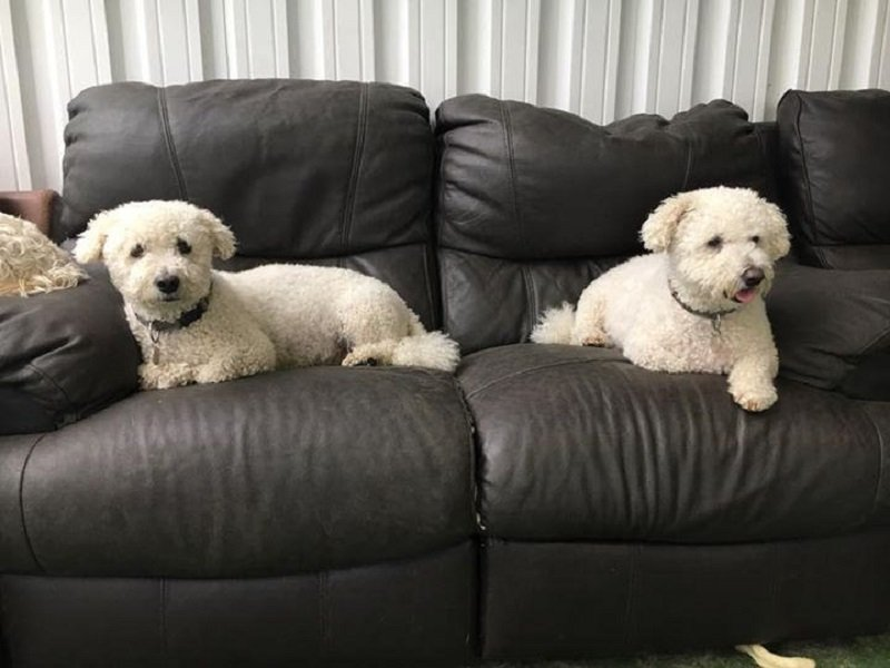 couch defender for dogs