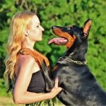 doberman pinscher temperament