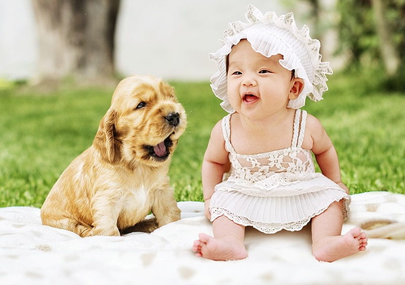 Newborn Baby and Dogs