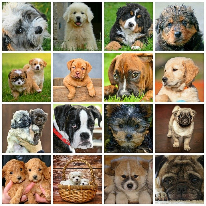 dog breed facts