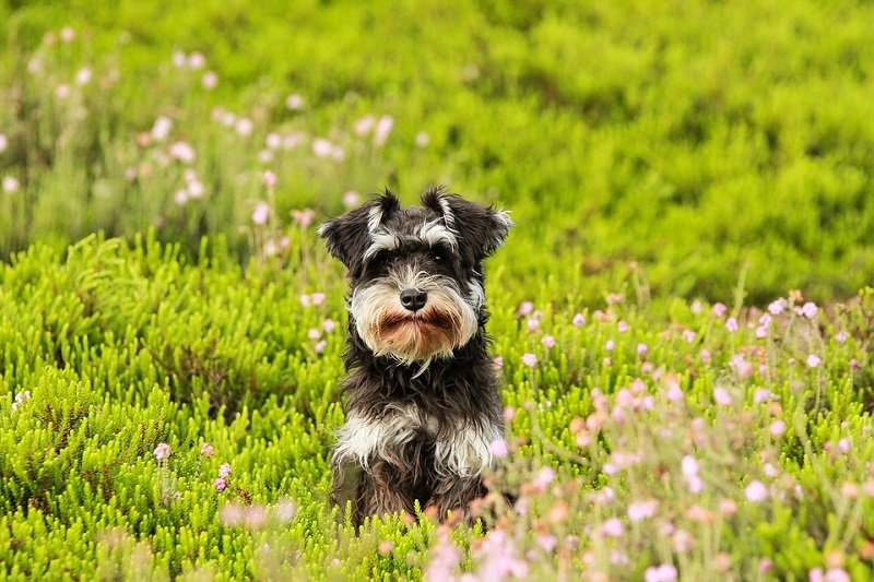 dog breeds that are easy to train