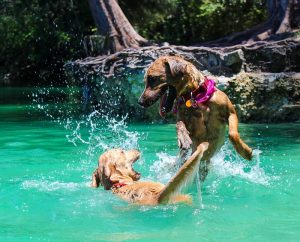 dog-breeds-that-love-water