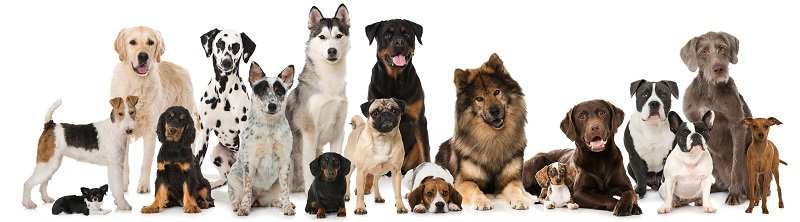 Several dog breeds lined up next to each other