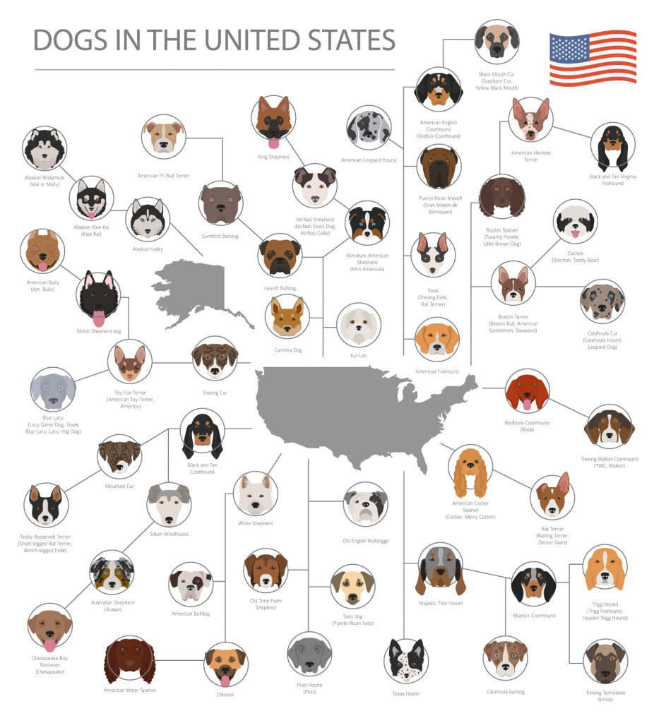 Overview of dog breeds in the United States