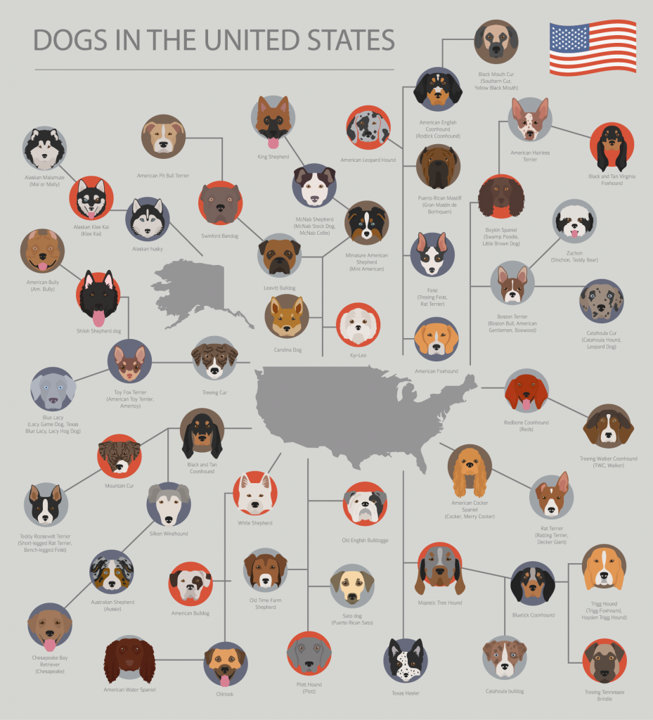 Overview of dog breeds in the United States on gray background