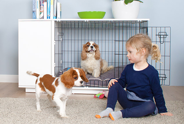 how to buy dog crate