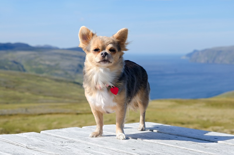 dog names inspired by travel nature and outdoors