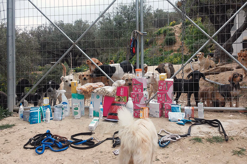 Items donated to Takis Shelter with many dogs in the background