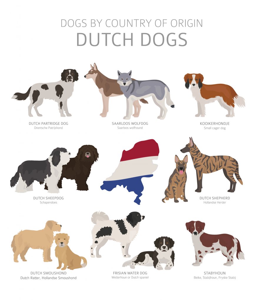 Illustration of Dutch dog breeds