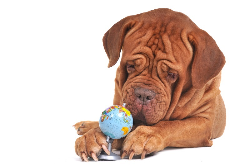 Dog with small globe isolated on white background