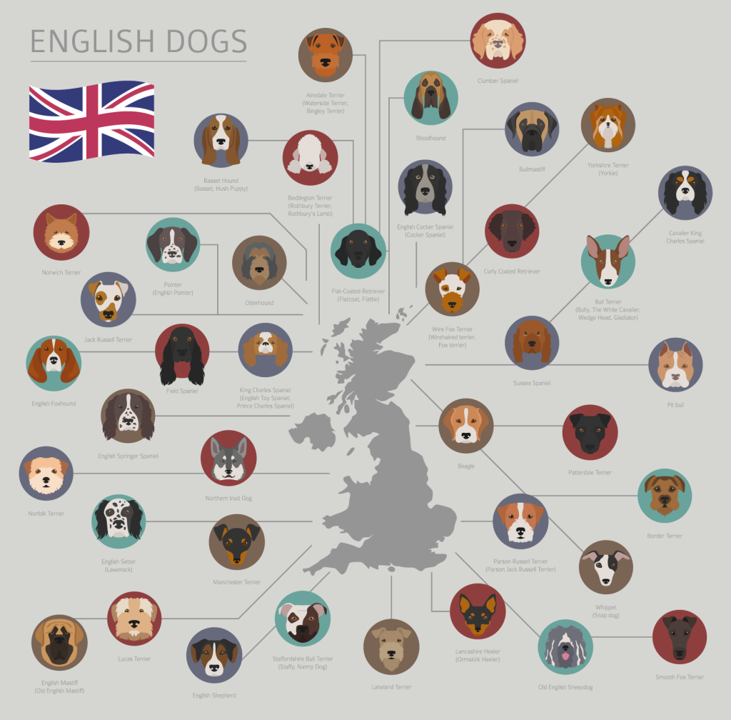 Illustration of English dog breeds
